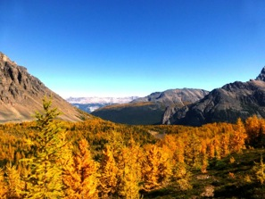 Larches of Autumn at Lake Louise, AB. Photo by Natasha Kutlesa
