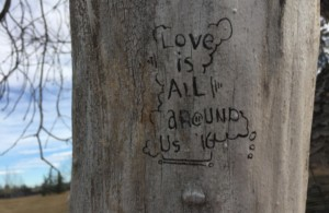 Love Is All Around Us. Photo by Donna Sales taken at River Park Dog Park in Calgary, AB